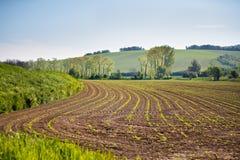 Terreno arabile della sorgente Scena ondulata di agricoltura della primavera Landsca rurale Fotografia Stock Libera da Diritti
