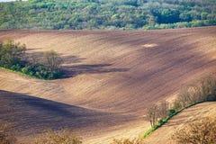 Terreno arabile della sorgente Scena ondulata di agricoltura della primavera Landsca rurale Immagine Stock Libera da Diritti