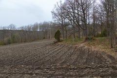 Terreno arabile e foresta Immagini Stock