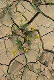 Terreno arabile secco, perdita del raccolto Immagine Stock