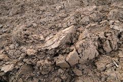 Terreno argilloso Immagini Stock