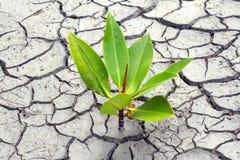 Terreno asciutto del seme nelle zone aride Fotografia Stock
