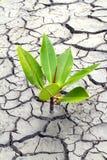 Terreno asciutto del seme nelle zone aride Fotografie Stock Libere da Diritti