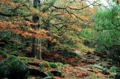 Terreno boscoso Fotografia Stock Libera da Diritti