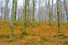Terreno boscoso Fotografia Stock
