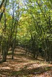 Terreno boscoso immagine stock