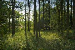 Terreno boscoso Immagini Stock