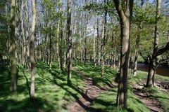 Terreno boscoso Fotografie Stock