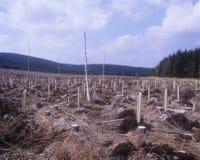 Terreno boscoso abbattuto Fotografie Stock