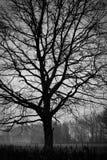 Terreno boscoso - albero. Fotographia di B&W Immagine Stock