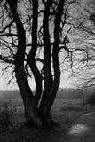 Terreno boscoso - albero. Fotographia di B&W Fotografia Stock