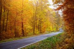 Terreno boscoso Autumn Road fotografia stock