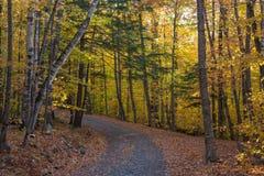 Terreno boscoso Autumn Trace Fotografie Stock Libere da Diritti