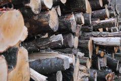 Terreno boscoso autunnale inglese Immagine Stock
