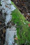 Terreno boscoso autunnale inglese fotografia stock libera da diritti