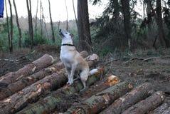 Terreno boscoso autunnale inglese Fotografie Stock