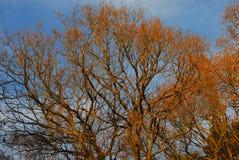 Terreno boscoso autunnale inglese Fotografia Stock