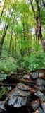 Terreno boscoso boreale fotografia stock