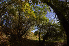 Terreno boscoso caduta/di autunno Fotografie Stock Libere da Diritti