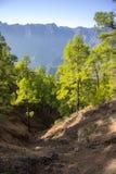 Terreno boscoso color giallo canarino Immagini Stock