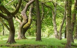 Terreno boscoso deciduo britannico tipico Immagini Stock Libere da Diritti