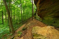 Terreno boscoso del parco di stato di funzionamento della Turchia Immagine Stock