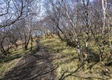 Terreno boscoso della montagna - la vegetazione di alte colline Immagine Stock Libera da Diritti