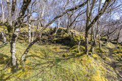 Terreno boscoso della montagna - la vegetazione di alte colline Fotografia Stock Libera da Diritti