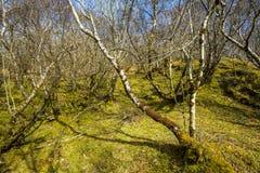 Terreno boscoso della montagna - la vegetazione di alte colline Fotografie Stock Libere da Diritti