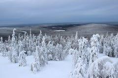 Terreno boscoso della neve Immagini Stock