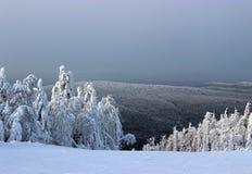 Terreno boscoso della neve della montagna Fotografia Stock Libera da Diritti