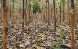 Terreno boscoso della piantagione in Pai, Tailandia fotografie stock libere da diritti