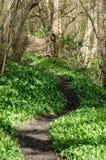 Terreno boscoso della primavera Fotografie Stock