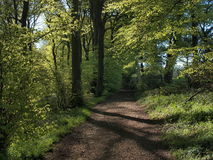 Terreno boscoso della primavera Fotografia Stock