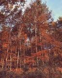 Terreno boscoso di autunno Fotografia Stock Libera da Diritti