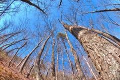 Terreno boscoso di inverno Immagini Stock
