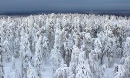 Terreno boscoso di inverno Fotografie Stock