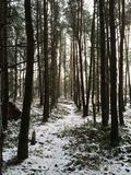 Terreno boscoso di mattina Fotografia Stock