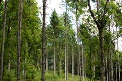 Terreno boscoso diretto pozzo a Millington, Yorkshire Fotografia Stock