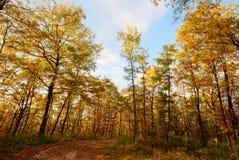 Terreno boscoso dorato Immagini Stock Libere da Diritti
