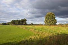 Terreno boscoso e tappeto erboso del pino Fotografia Stock Libera da Diritti