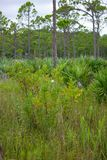 Terreno boscoso in Florida del sud fotografia stock libera da diritti