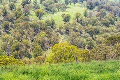 Terreno boscoso, Hunter Valley superiore, NSW, Australia Fotografia Stock Libera da Diritti