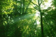 terreno boscoso incantato Fotografie Stock Libere da Diritti