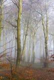 Terreno boscoso inglese della spiaggia su una mattina nebbiosa Fotografia Stock Libera da Diritti
