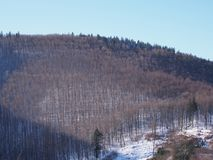 Terreno boscoso innevato al paesaggio della gamma di montagne di Beskid in Jaworze vicino alla città di Bielsko-Biala in Polonia Immagini Stock Libere da Diritti