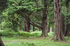 Terreno boscoso maturo Fotografia Stock