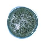 Terreno boscoso minuscolo del pianeta fotografia stock libera da diritti