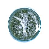 Terreno boscoso minuscolo del pianeta immagini stock