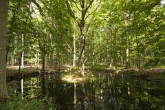 Terreno boscoso misto con il piccolo stagno Immagine Stock Libera da Diritti